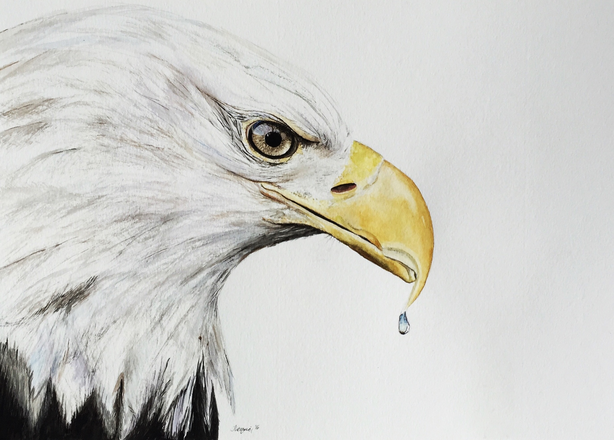 eagle watercolor painting image