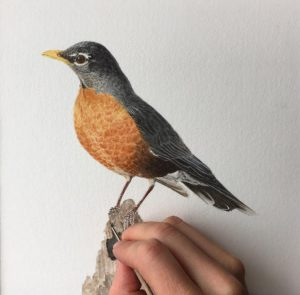 Robin Progress Photo
