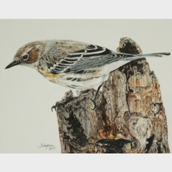 Yellow-Rumped Warbler Painting