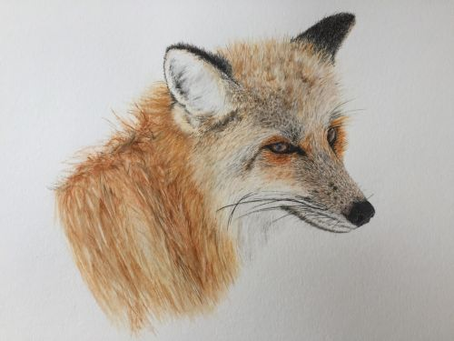 Rouge the Fox