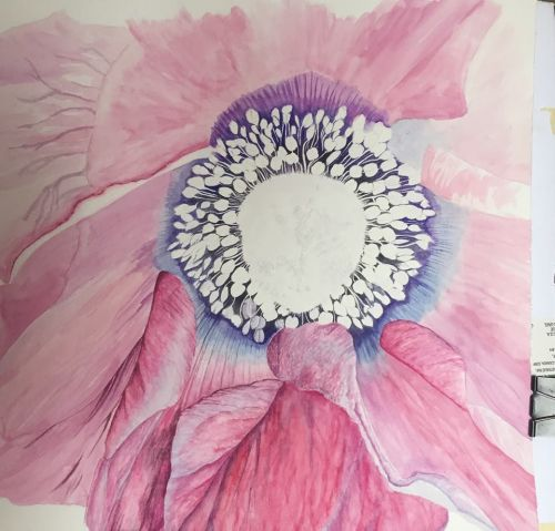 Defining the stamen with more color