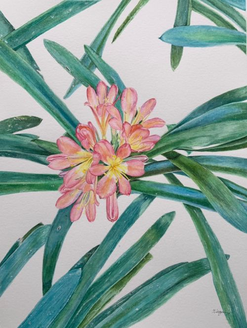 African Bush Lily original watercolor painting SOLD
