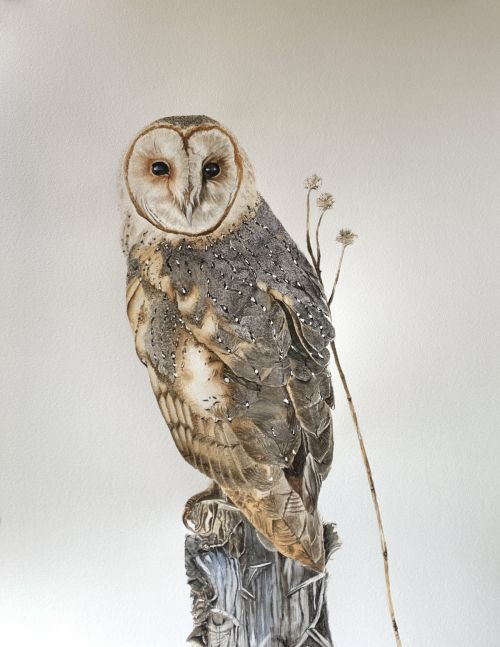 Life size Barn owl on stump painting