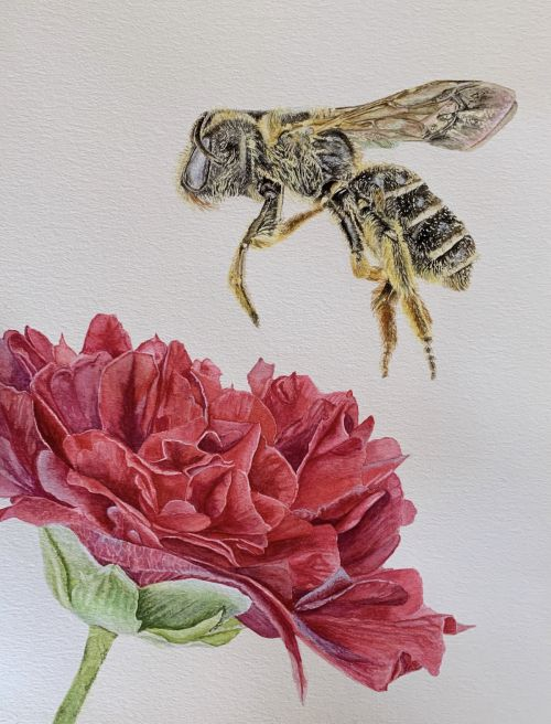 Bee and Flower Beauty and the Beast painting