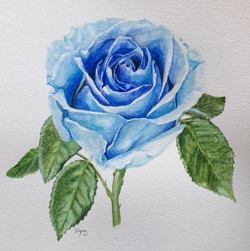 Blue Rose botanical painting - SOLD