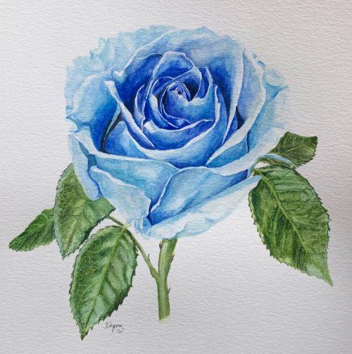 Blue Rose SOLD