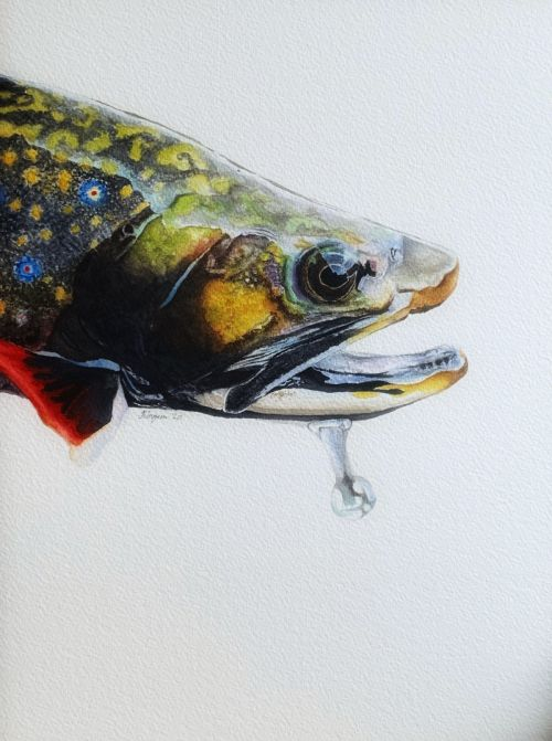 Brook Trout with waterdrop watercolor painting - SOLD