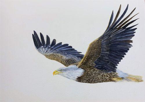 Eagle watercolor painting