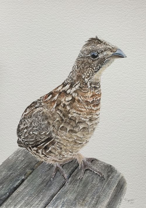 """Fluffy Bob"" roughed grouse SOLD"
