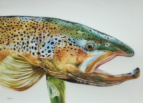 """""""John's Brown trout""""SOLD"""