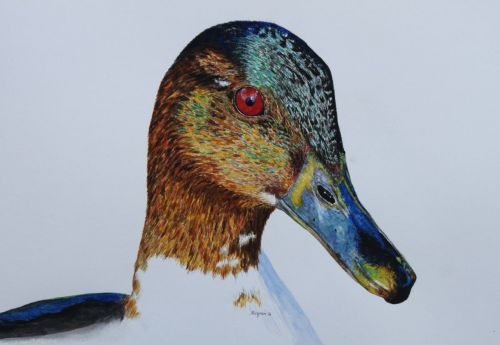 Merganser SOLD