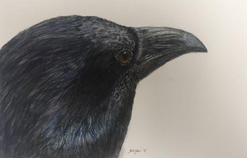 """""""Inquisitor"""" raven"""