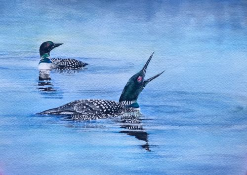 Loons on Jarvis Lake watercolor painting - SOLD