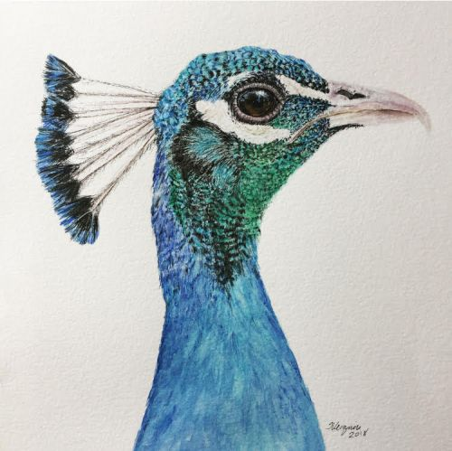 """""""Penner Peacock"""" SOLD"""