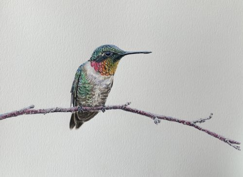 Ruby-throated Hummingbird perched on branch painting