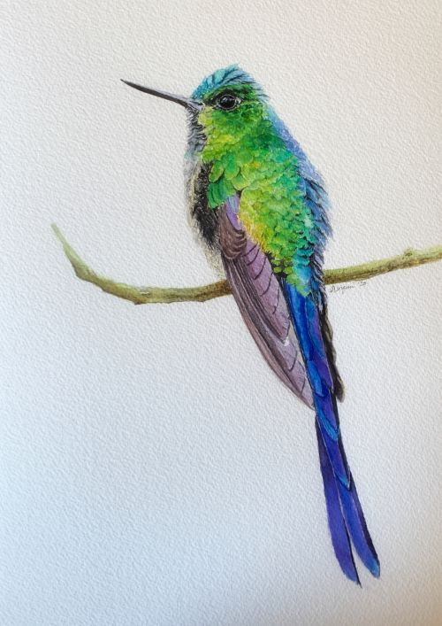 Violet tailed hummingbird painting