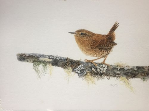 Winston the Wren SOLD
