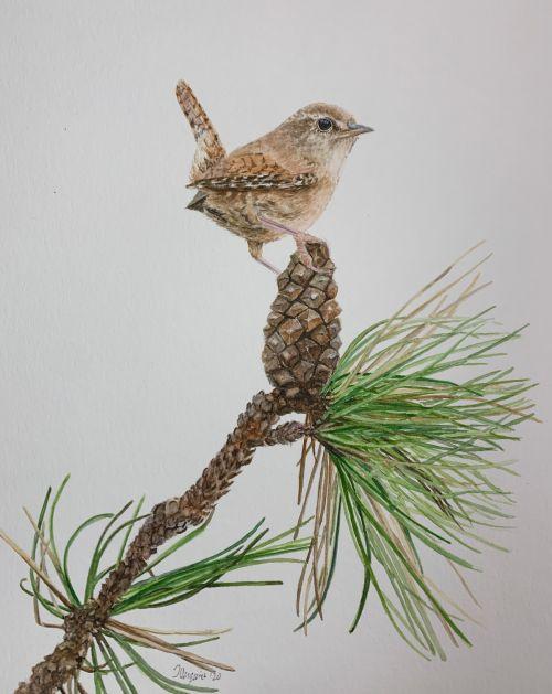 Winter Wren and Pine