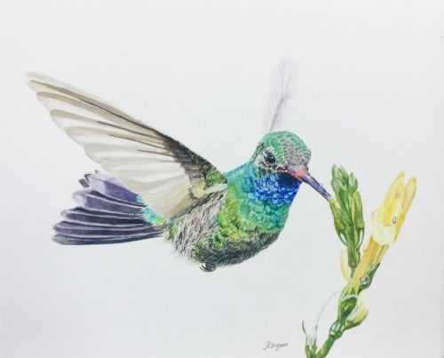 """Color Theory"" Broad billed Hummingbird"