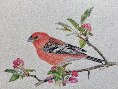 Grosbeak and Blossoms