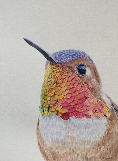 """Bulletproof"" watercolor male hummingbird painting"