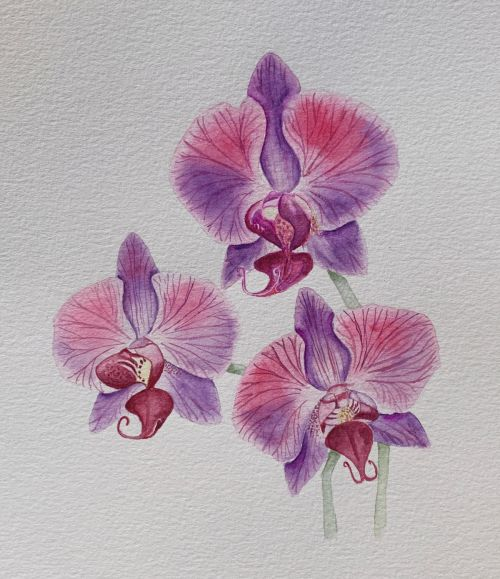 Orchids study