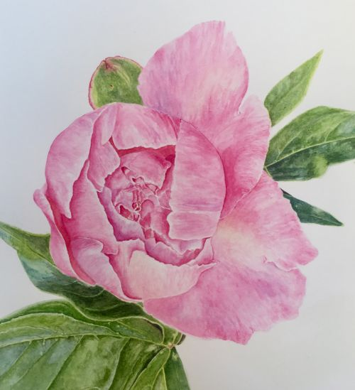 """Flourish Where You're Planted"" Pink Peony Bloom"